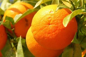 640px-orange_frucht_fruit_cyprus_pict8063
