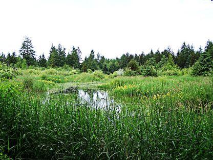 640px-Marsh
