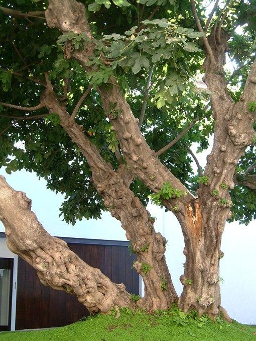 676px-Malaga_25-9-2007a